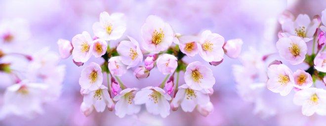 flowering-trees-014