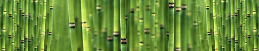 bamboo-plants-046