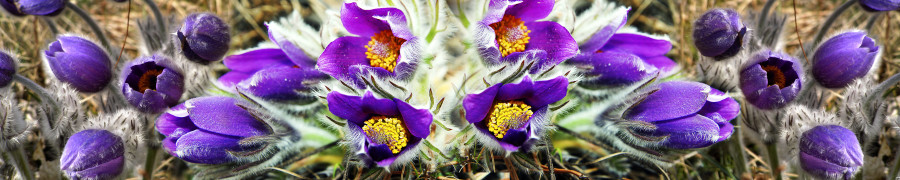 wildflowers-092
