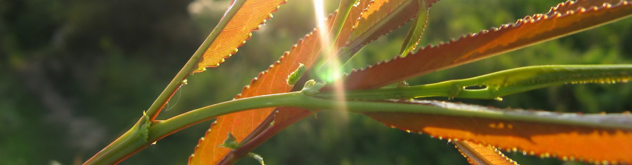 bamboo-plants-097