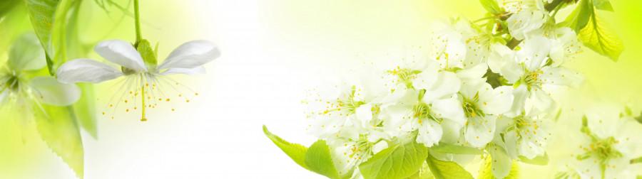 flowering-trees-026