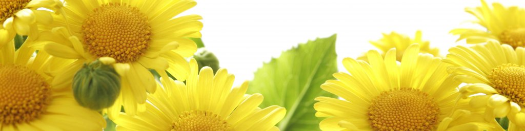 wildflowers-007