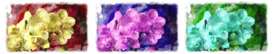orchids-090