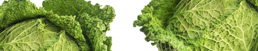 vegetables-120