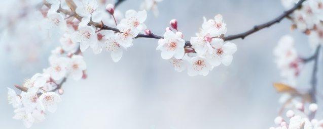 flowering-trees-025