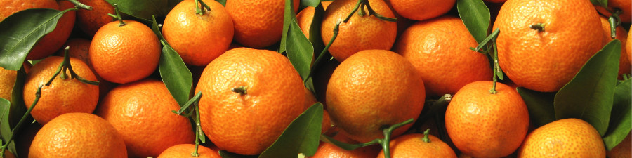 fruit-088