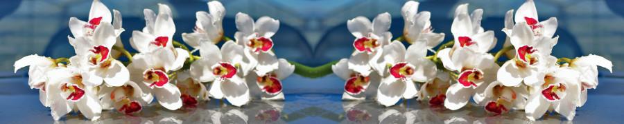 orchids-088