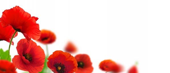 wildflowers-020