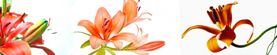 other-flower-065