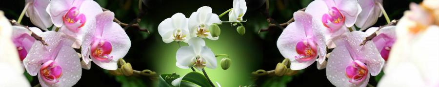 orchids-085