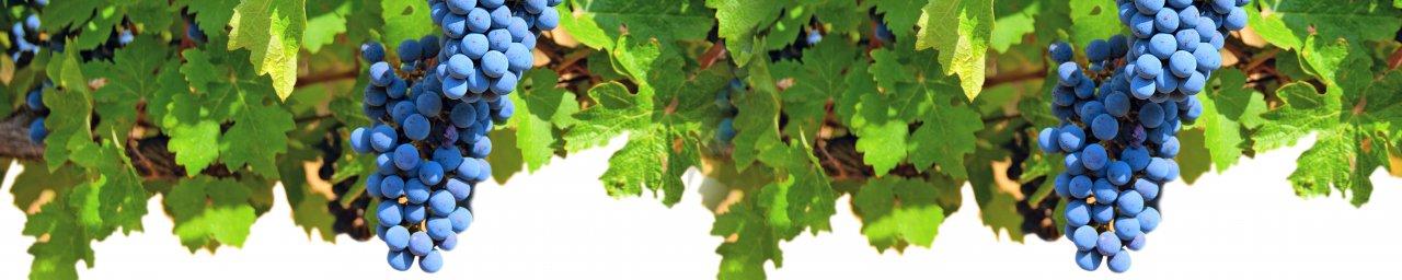 wine-077