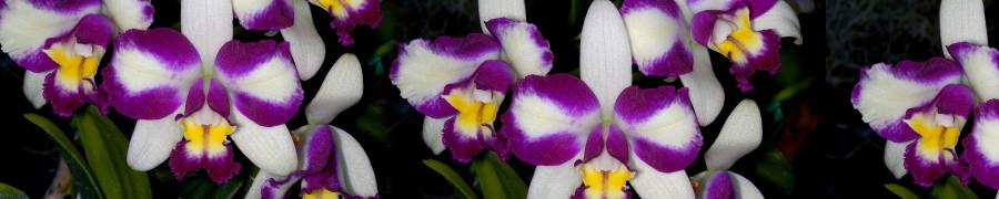 orchids-079