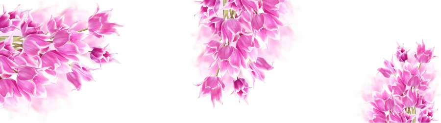 tulips-074