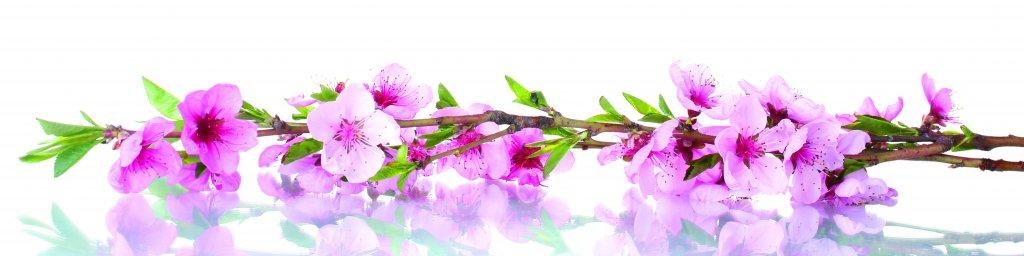 flowering-trees-051