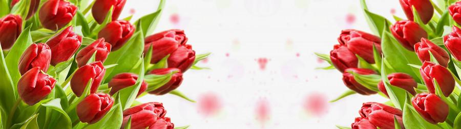 tulips-077