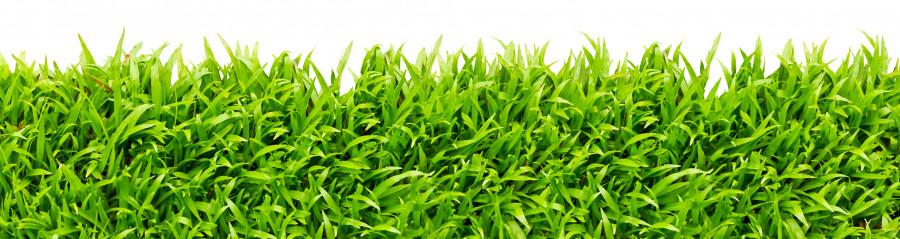 bamboo-plants-096