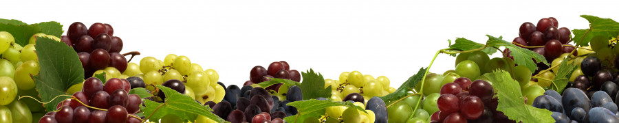 fruit-082