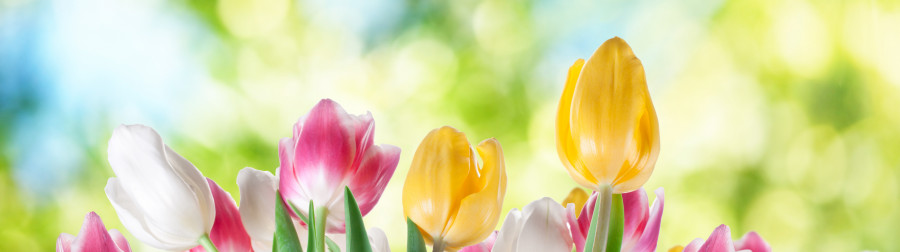 tulips-055