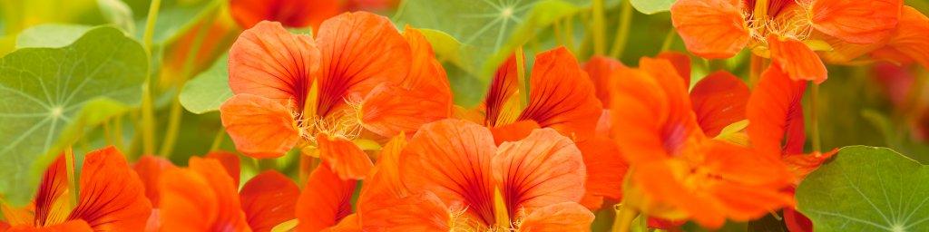 wildflowers-064