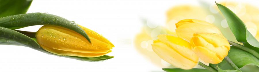 tulips-087