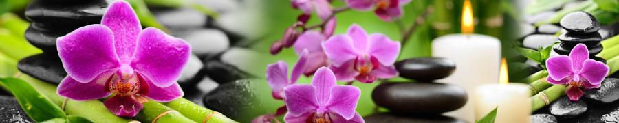 orchids-056