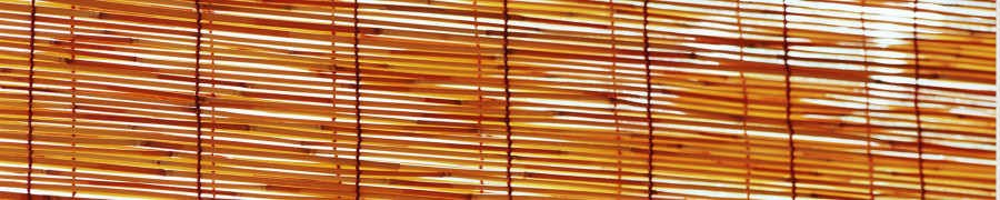 bamboo-plants-167