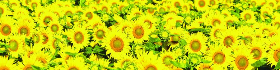 wildflowers-031