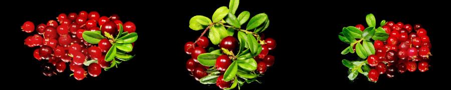 fruit-052