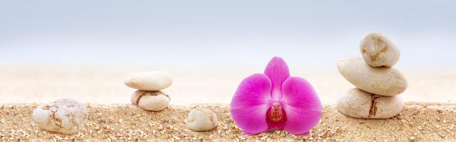 orchids-029