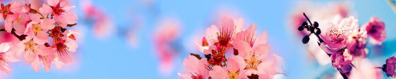 flowering-trees-027