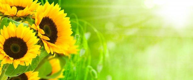 wildflowers-012