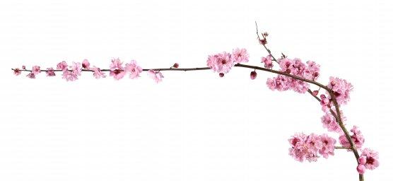 flowering-trees-057