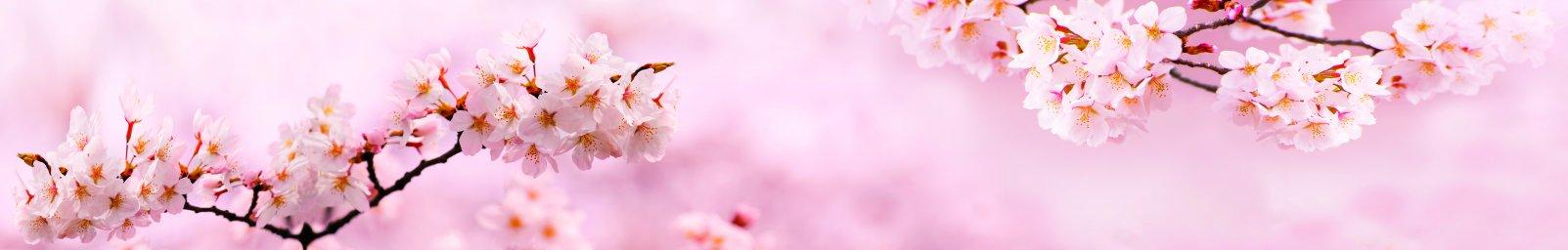 flowering-trees-030