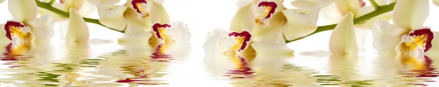 orchids-008