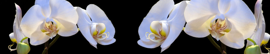 orchids-066