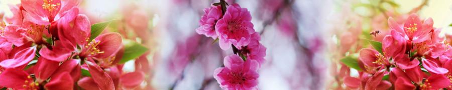 flowering-trees-075