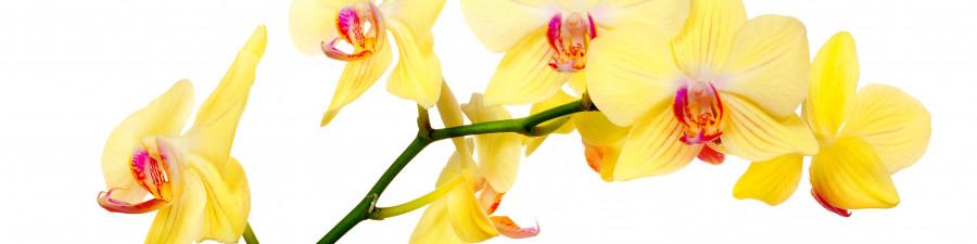 orchids-012