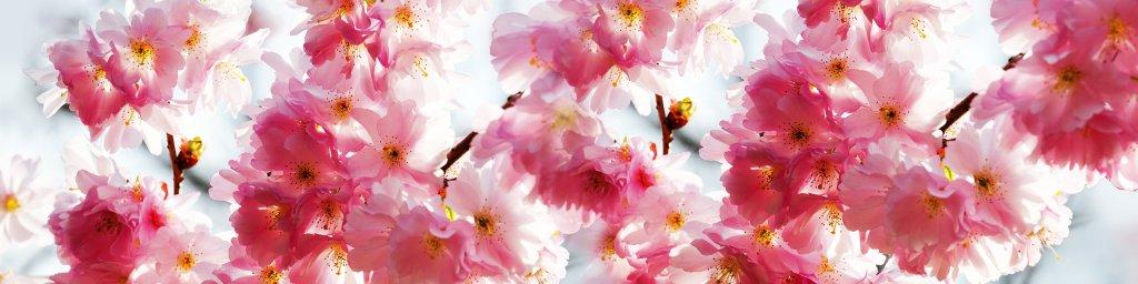 flowering-trees-018