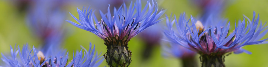 wildflowers-065