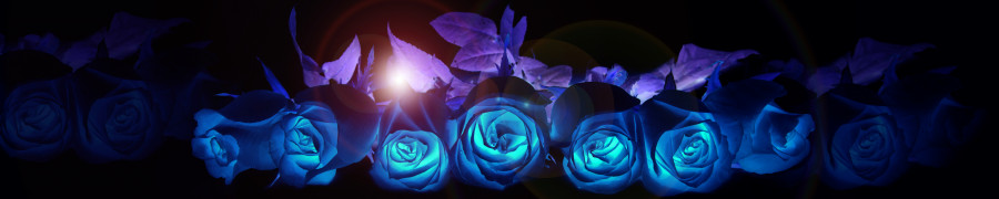 roses-017