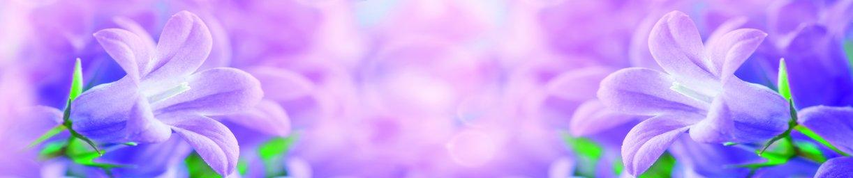 wildflowers-008