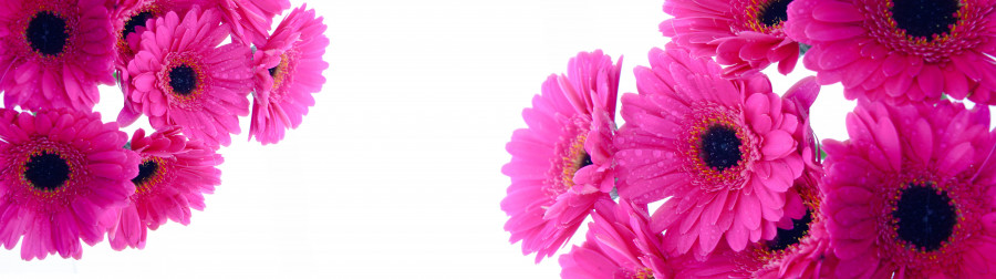 other-flower-123