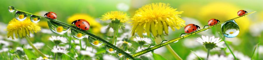 wildflowers-010