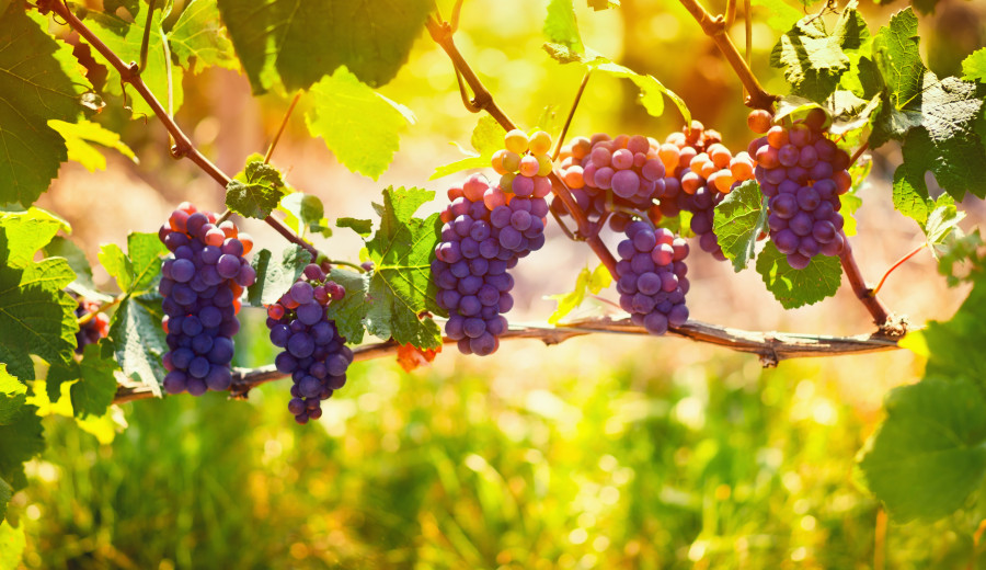 fruit-106