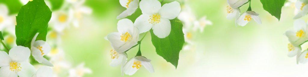 flowering-trees-022