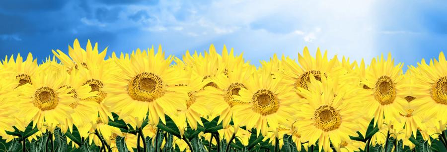 wildflowers-039