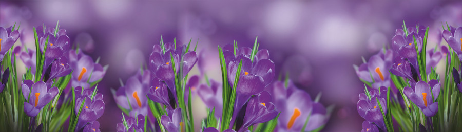 wildflowers-107
