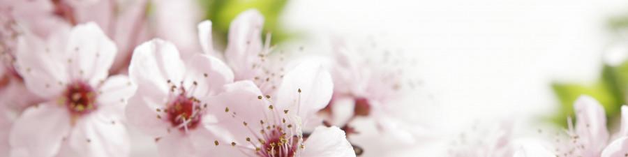 flowering-trees-019