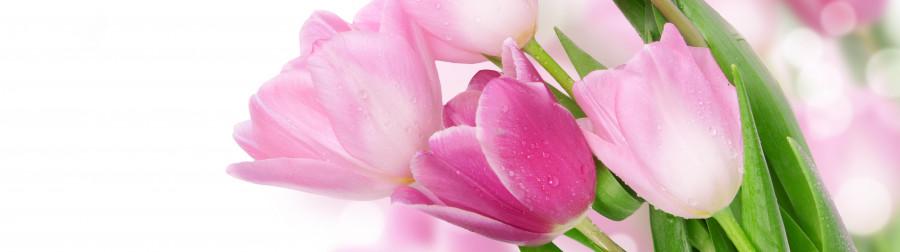 tulips-010