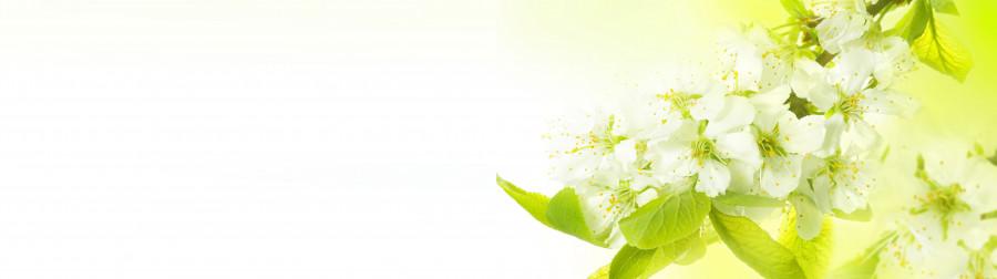 flowering-trees-034